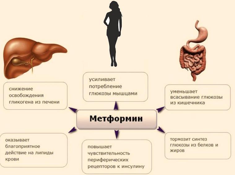 Как метформин снижает уровень сахара в крови при диабете 2 типа