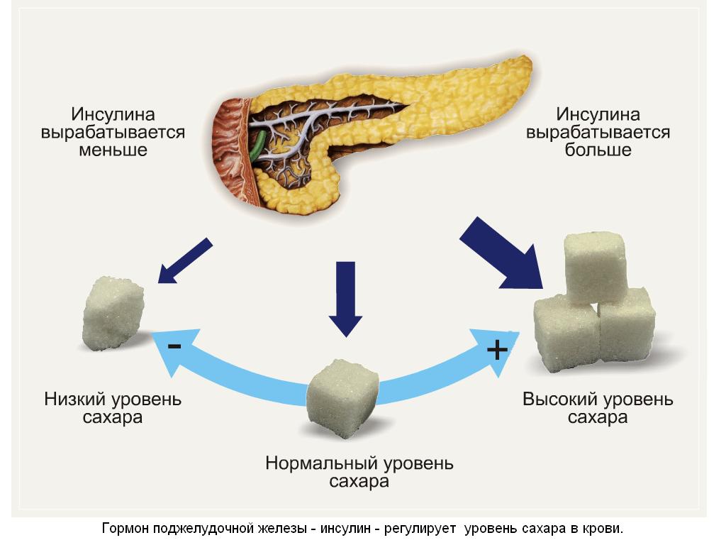регуляция глюкозы