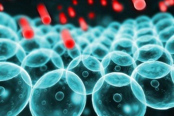Триглицериды и холестерин повышены: что это значит?